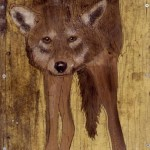 beccamidwood-fox
